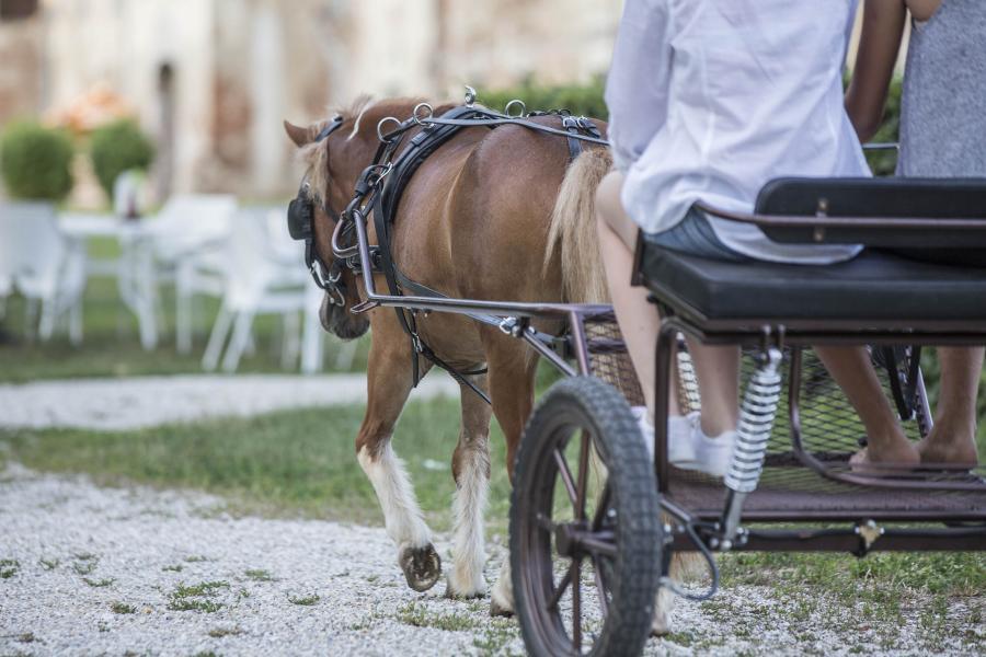 S kočijami 21. stoletja do prepoznavne turistične ponudbe